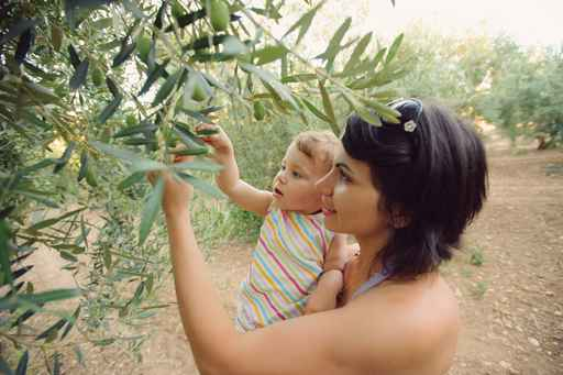 Picking Olives
